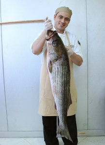 33lb Striped Bass, hand-line caught, Maryland