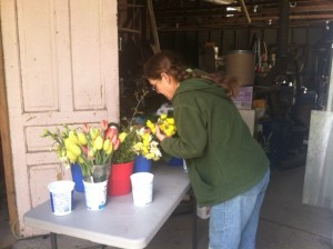 Pat Smith of Kirklin Gardens sorting flowers for our main dining room.