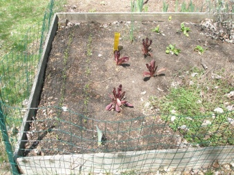 Late spring plantings - carrots, lettuce, spinach, oregano, sage -