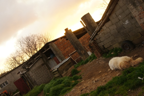 The sun rising at a local sheep farm in Calabria.