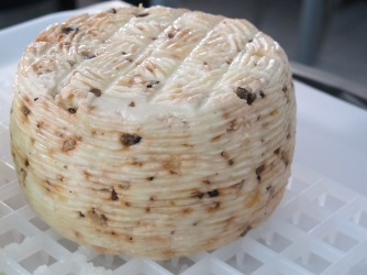 Freshly made pecorino al tartufo.